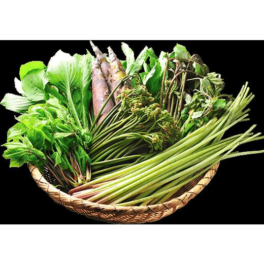 地元の旬の山菜